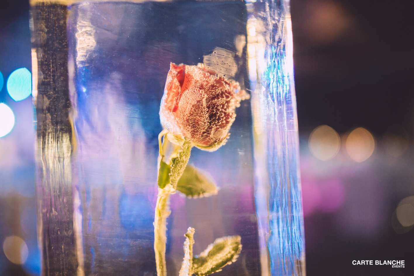 xmas-party-loyens-loeff-2013-givrée-décoration-rose-projet