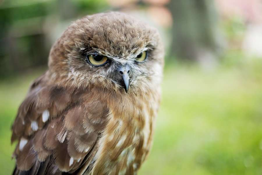 family day loyens-loeff-2012-animaux-hibou-family-day-events