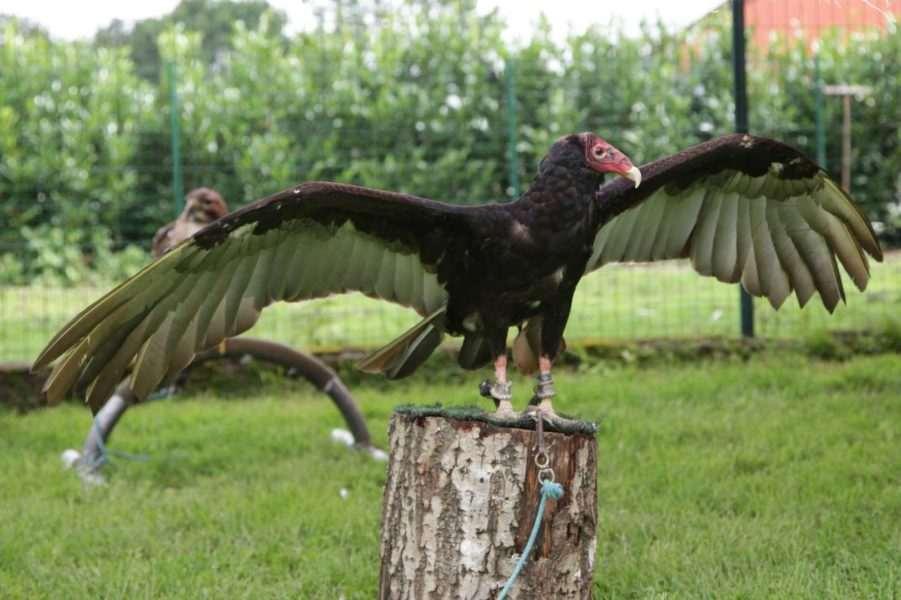 family day loyens-loeff-2012-animaux-oiseaux-evenements