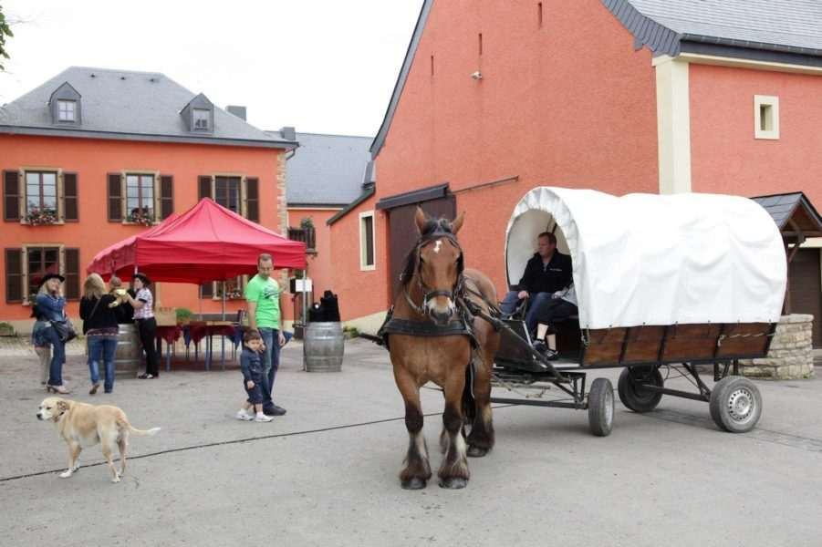 family-day-loyens-loeff-2012-chevaux-cowboy-rencontre-events-partage