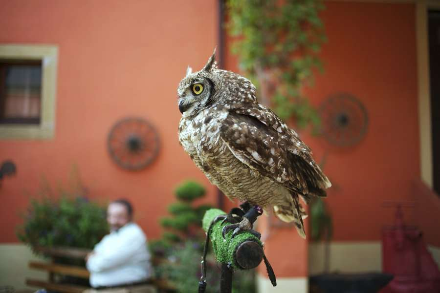 family-day-loyens-loeff-2012-hibou-animaux-cowboy-events
